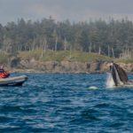 Danielle humpback lunge feed zodiac